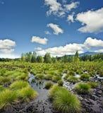 Τοπίο ελών τύρφης - το εθνικό πάρκο Sumava ΕΥΡ στοκ εικόνες με δικαίωμα ελεύθερης χρήσης