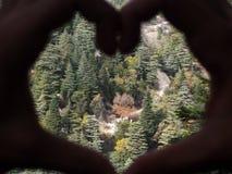 Τοπίο ενός λιβανέζικου δάσους που περιέχει πολλούς κέδρους στοκ εικόνες με δικαίωμα ελεύθερης χρήσης
