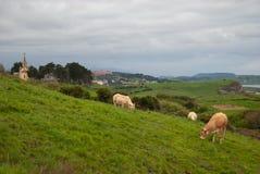 Τοπίο ενός λιβαδιού με τις αγελάδες της φυλής ξανθής Aquitaine στοκ εικόνες με δικαίωμα ελεύθερης χρήσης