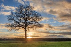 Τοπίο επαρχίας με ένα όμορφο δέντρο και ένα ζωηρόχρωμο ηλιοβασίλεμα, Weelde, Φλαμανδική περιοχή, Βέλγιο στοκ εικόνες με δικαίωμα ελεύθερης χρήσης