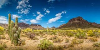 Τοπίο ερήμων βουνών της Αριζόνα Στοκ Εικόνες