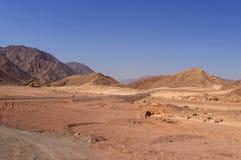 Τοπίο ερήμων, δρόμος, καμήλες στοκ εικόνες