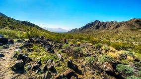 Τοπίο ερήμων με τους κάκτους Saguaro και βαρελιών κατά μήκος του ίχνους πεζοπορίας Bajada στα βουνά του πάρκου νότιων βουνών Στοκ Φωτογραφίες