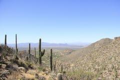 Τοπίο ερήμων με το μπλε ουρανό και τον κάκτο Στοκ φωτογραφία με δικαίωμα ελεύθερης χρήσης