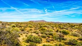 Τοπίο ερήμων της Αριζόνα με τους πολλούς κάκτους και τους θάμνους του και τα απόμακρα βουνά Στοκ Εικόνες