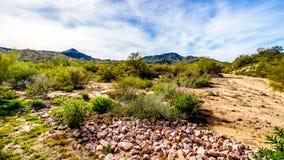 Τοπίο ερήμων της Αριζόνα με το πολύ Saguaro του και άλλα απόμακρων βουνά κάκτων και Στοκ Εικόνες