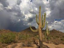 Τοπίο ερήμων Sonoran Στοκ Εικόνες