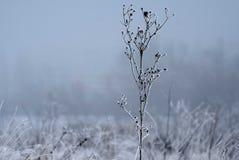Τοπίο ζιζανίων χειμερινού βαμβακιού Στοκ Φωτογραφίες