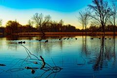 Τοπίο ηλιοβασιλέματος με την μπλε λίμνη και τις πάπιες Στοκ φωτογραφίες με δικαίωμα ελεύθερης χρήσης