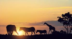 Τοπίο ηλιοβασιλέματος σαφάρι Στοκ εικόνες με δικαίωμα ελεύθερης χρήσης