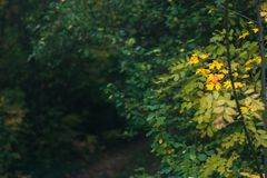 Τοπίο ημέρας φθινοπώρου δάσος φθινοπώρου Στοκ Φωτογραφία