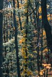 Τοπίο ημέρας φθινοπώρου δάσος φθινοπώρου Στοκ Εικόνα