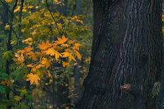 Τοπίο ημέρας φθινοπώρου δάσος φθινοπώρου Στοκ εικόνα με δικαίωμα ελεύθερης χρήσης