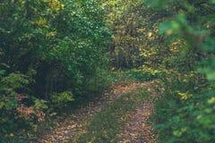 Τοπίο ημέρας φθινοπώρου δάσος φθινοπώρου Στοκ φωτογραφία με δικαίωμα ελεύθερης χρήσης