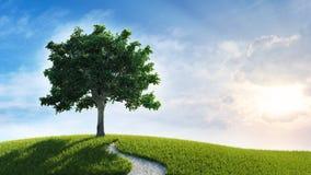 Τοπίο ηλιοβασιλέματος - δέντρο σε έναν λόφο ελεύθερη απεικόνιση δικαιώματος