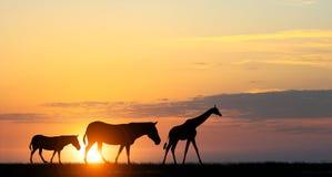 Τοπίο ηλιοβασιλέματος σαφάρι Στοκ εικόνα με δικαίωμα ελεύθερης χρήσης