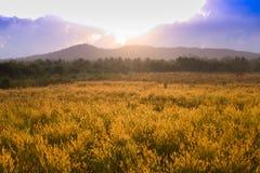 Τοπίο, ηλιόλουστη αυγή σε έναν τομέα στοκ εικόνες