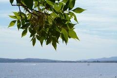 Τοπίο θάλασσας με μια ιδέα δέντρων στοκ εικόνες
