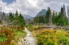 Τοπίο θερινών βουνών Στοκ εικόνες με δικαίωμα ελεύθερης χρήσης