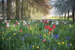Τοπίο λιβαδιών θερινών λουλουδιών άνοιξης στο διάστικτο φως του ήλιου με το s Στοκ εικόνα με δικαίωμα ελεύθερης χρήσης