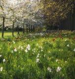 Τοπίο λιβαδιών θερινών λουλουδιών άνοιξης στο διάστικτο φως του ήλιου Στοκ εικόνες με δικαίωμα ελεύθερης χρήσης