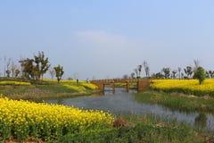 Τοπίο λιμνών Yangcheng Suzhou, λουλούδι canola, κίτρινο Στοκ Φωτογραφία