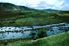 τοπίο ιρλανδικών αγελάδ&omega Στοκ εικόνα με δικαίωμα ελεύθερης χρήσης