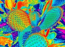 Τοπίο κάκτων στο φωτεινό βαμμένο duotone υπόβαθρο χρωμάτων Επίδραση νέου πυράκτωσης Τομέας κάκτων Κήπος του λουλουδιού και των εγ απεικόνιση αποθεμάτων