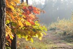Τοπίο και δέντρο πτώσης με τα πολύχρωμα φύλλα φθινοπώρου Στοκ Εικόνες