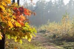 Τοπίο και δέντρο πτώσης με τα πολύχρωμα φύλλα φθινοπώρου Στοκ εικόνες με δικαίωμα ελεύθερης χρήσης