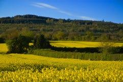 τοπίο λόφων κίτρινο Στοκ Εικόνες