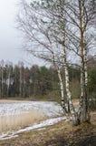 Τοπίο Μαρτίου άνοιξη στην ξύλινη λίμνη Στοκ Φωτογραφία