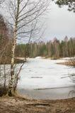 Τοπίο Μαρτίου άνοιξη στην ξύλινη λίμνη Στοκ εικόνα με δικαίωμα ελεύθερης χρήσης