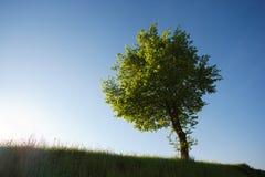 Τοπίο με ένα δέντρο Στοκ φωτογραφία με δικαίωμα ελεύθερης χρήσης