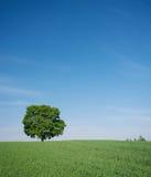 Τοπίο με ένα δέντρο Στοκ Φωτογραφίες