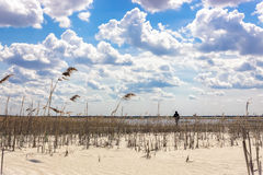 Τοπίο με μια νεφελώδη αμμώδη παραλία ουρανού και καλάμων Στοκ Εικόνα