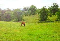 Τοπίο με τα άλογα, κοιλάδα Megalong, μπλε βουνά, Australi Στοκ Εικόνες