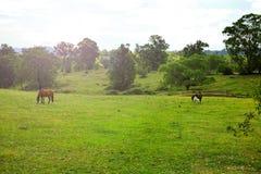 Τοπίο με τα άλογα, κοιλάδα Megalong, μπλε βουνά, Australi Στοκ Εικόνα