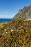 Τοπίο με τα βουνά και cloudberry τα λουλούδια Στοκ εικόνες με δικαίωμα ελεύθερης χρήσης