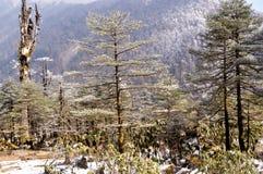 Τοπίο με τα δάση δέντρων έλατου που περιβάλλονται από τα βουνά που καλύπτονται με το χιόνι το χειμώνα σε Pahalgam, Jammu Κασμίρ,  στοκ εικόνα με δικαίωμα ελεύθερης χρήσης