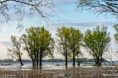 Τοπίο με τα δέντρα, Στοκ φωτογραφία με δικαίωμα ελεύθερης χρήσης