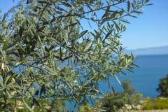 Τοπίο με τα μικρούς ελληνικούς νησιά και τους κόλπους στην Πελοπόννησο, Ελλάδα κοντά στην πόλη Arkadiko, προορισμός θερινών διακο στοκ φωτογραφίες