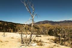 Τοπίο με τα νεκρά δέντρα Μαμμούθ καυτές ανοίξεις, εθνικό πάρκο Yellowstone, Ουαϊόμινγκ, ΗΠΑ Στοκ Εικόνες