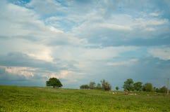 Τοπίο με τα πράσινα δέντρα ενάντια στο μπλε ουρανό Στοκ Εικόνες