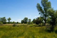 Τοπίο με τα πράσινους δέντρα, το λιβάδι και το μπλε ουρανό Στοκ Εικόνες