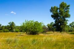 Τοπίο με τα πράσινους δέντρα, το λιβάδι και το μπλε ουρανό Στοκ Φωτογραφίες