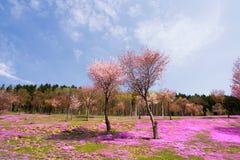 Τοπίο με τα ρόδινα λουλούδια στο βουνό Στοκ Εικόνα
