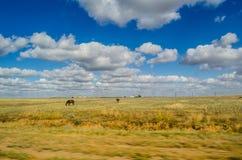 Τοπίο με τα σύννεφα και τα άλογα στους τομείς Στοκ Φωτογραφία