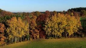 Τοπίο με τα φθινοπωρινά χρωματισμένα δέντρα φιλμ μικρού μήκους
