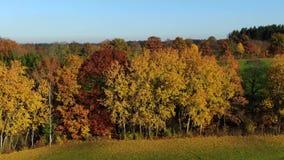Τοπίο με τα φθινοπωρινά χρωματισμένα δέντρα απόθεμα βίντεο